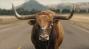 "Lincoln MKC's ""Bull"" starring Matthew McConaughey"
