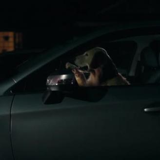 "Brian Lee Hughes Directs ""Puppy"" For Subaru, Carmichael Lynch"