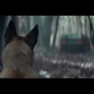 Top Spot of the Week: 30 Million Friends' Pet Abandonment Video From Buzzman