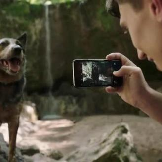 """The Best Work You May Never See: Tribal Worldwide Creates """"Dogumentary""""for IAMS"""