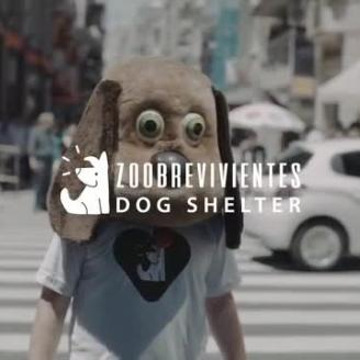 Dhelet Y&R, Buenos Aires, Raises Decibel Awareness Over Effects of Fireworks On Dogs