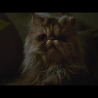 "The Best Work You May Never See: Max Sherman Directs ""Cat"" For Telia, Forsman & Bodenfors"