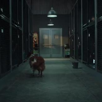 "Aaron Stoller Directs Pedigree's ""Pick Me"" For BBDO NY"