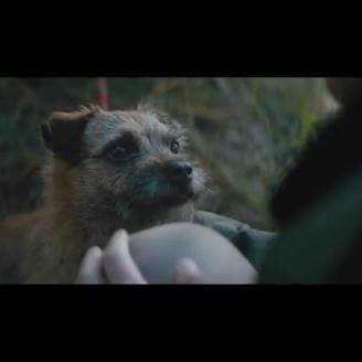 Top Spot of the Week: Buzzman, Director Vincent Lobelle Combat Pet Abandonment