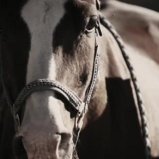 "The Martin Agency Trots Out ""This Old Horse"" For Purina"