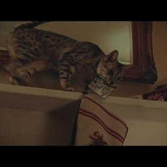 "RSA's Jake Scott Directs ""Bodega Cat"" For New York Lotto, McCann NY"