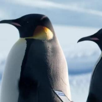 "Director Randy Krallman, The Martin Agency, GEICO Lead ""The Great Penguin Migration"""