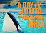 A Day in the Life of Lolita the Performing Orca