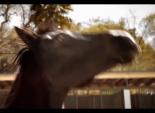 """Blue Cross Blue Shield's """"Horse"""""""