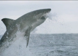 """The Weather Channel's """"Shark-icane"""""""