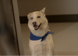 """Top Spot of the Week: Gundersen Health System's """"Therapy Dog"""""""