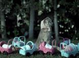 "The Best Work You May Never See: Jordan Brady Directs ""Marmalade the Spayed Cat"" PSA"