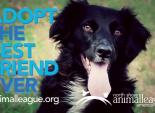 North Shore Animal League - Better 1