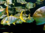 """Shedd Aquarium's """"Feel the Wonder"""""""